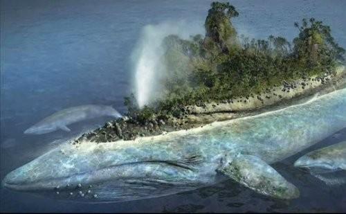 balena-isola_w500_h309.jpg